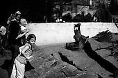 Wroclaw, Poland, April 4, 2009:<br /> Visitors watching Masai baboons, at the Wroclaw Zoo.<br /> (Photo by Piotr Malecki / Napo Images)..Odwiedzajacy ogladaja pawiany masajskie w Zoo..Wroclaw, Kwiecien 2009.Fot: Piotr Malecki / Napo Images