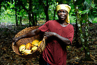 Kuapa Kokoo cocoa farmer Aminatu Kasim on her farm. Kuapa Kokoo is a cocoa farmers' co-operative with 45,000 members spread across the forests of Kumasi. The farmers jointly own a 45 percent stake in the company, which is also a major stakeholder in the London-based fair trade company Divine Chocolate Ltd..