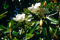 FLOWERING TREES AND SHRUBS<br />
