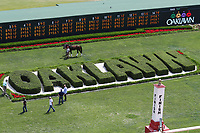 HOT SPRINGS, AR - April 14: Classic Empire schools in the infield at Oaklawn Park on April 14, 2017 in Hot Springs, AR. (Photo by Ciara Bowen/Eclipse Sportswire/Getty Images)