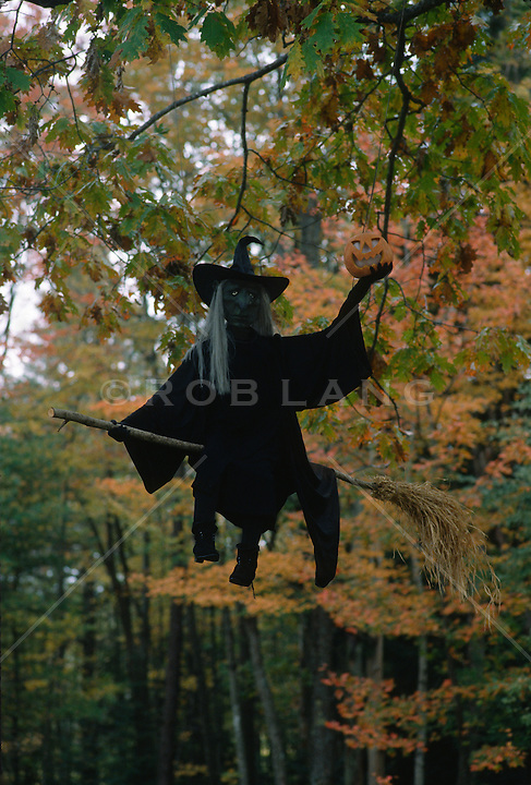 Halloween Witch figure hanging from a tree