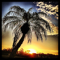 Palm tree and clouds at sunrise, iPhone photo from the instgram photostream of bcpix, Florida-based freelance photographer Brian Cleary. (Photo by Brian Cleary/www.bcpix.com)