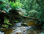 Australia_New_Zealand