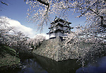 The historic landmark of the Hirosaki Castle provides a backdrop of many pictures at the Cherry Blossom Festival held in Oyo Park near Hirosaki Castle in Aomori Prefecture in Northern Honshu, Japan. Over 1500 cherry trees come into bloom from late April to Early May. (Jim Bryant Photo).........