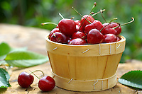 fresh picked cherries