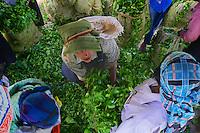 2014_ Sri Lanka_Tea plantations