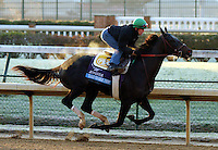 Take Charge Indy, trained by Patrick Byrne , exercises in preparation for the 2011 Breeders' Cup at Churchill Downs on October 30, 2011.