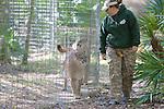 Big Cat Rescue Staff & Cougars