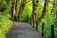 Footpath to Multnomah Falls, Columbia River Gorge National Scenic Area, Oregon, USA