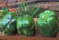 Green Bell Peppers California Wonder, sweet pepper