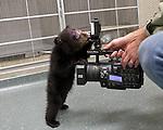 Oregon Zoo Bear PR