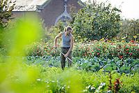 Gus Hoeing in the Vegetable Garden