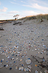 Shell strewn beach, Tasmania