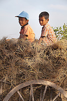 January 9th, 2009_KEP, CAMBODIA_ Two young boys pilot an ox-cart down a country road near the Cambodian town of Kep.  Photographer: Daniel J. Groshong/Tayo Photo Group.