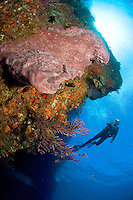 Scuba Diver at West Wall<br /> Grenadines