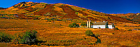 Barn & Fall Colors at Park City, Wasatch Mountains, Wasatch / Cache National Forest, Utah