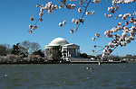 Washington, DC: Cherry Blossom Festival.  Cherry blossoms and Jefferson Memorial.  Photo #: washch103 (nef511)..Photo copyright Lee Foster, www.fostertravel.com, 510-549-2202, lee@fostertravel.com