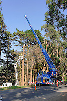 Mobile crane working on tree clearing.<br /> <br /> Larger JPEG + TIFF images available by contacting use through our contact page at :..www.photography4business.com