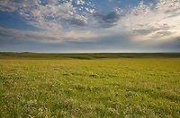 Prairie vista at Tallgrass Prairie National Preserve in the Flint Hills near Strong City, Kansas, AGPix_0607