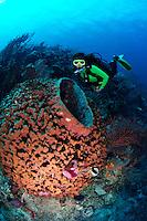 nr0308-D. Giant Barrel Sponge (Xestospongia muta) and scuba diver Melissa Cole (Model Released). Belize, Caribbean Sea.<br /> Photo Copyright &copy; Brandon Cole. All rights reserved worldwide.  www.brandoncole.com