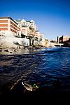 Ducks float on the Truckee River through Reno, NV, December 2, 2009.