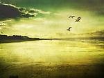 Birds flying over a beach with a setting sun