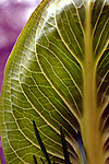 Patterns seen in March Vegetation at Southard Pond Park in Babylon on Saturday April 14, 2007. Photo by Jim Peppler. Photo by Jim Peppler. Copyright Jim Peppler/2007.