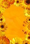 Orange background framed with yellow wild daisy flowers