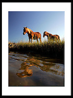 Assateague Island National Seashore, Maryland.  © Andrew Shurtleff