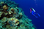 A scuba diver swims along the edge of a coral drop-off on  Vanessa's Reef in Kimbe Bay off New Britain Island, Papua New Guinea.  A single coral reef here can house more species of coral than the entire Caribbean.