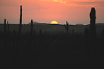 Sunset In Baja