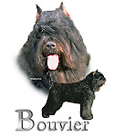 Bouvier This design is offered on gift merchandise ONLY.<br />
