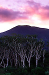 Sunrise over Melaleuca gum trees at the entrance to Noah Creek in Daintree National Park, far north Queensland, Australia