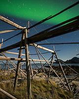 Northern Lights shine in sky over empty cod stockfish drying racks, near Storsandnes, Flakstadoy, Lofoten Islands, Norway