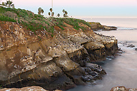 This long exposure image taken before dawn on a calm morning at La Jolla Cove shows hundreds of nesting pelicans sitting on the coastal cliffs above the ocean.  Palm trees and the ocean define the horizon.
