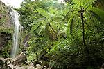 Tumaguiti Falls, Mt. Isarog, Consocep