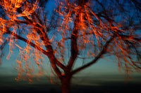 Blurred vision of a tree at night with unique colorations