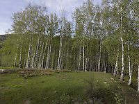 FOREST_LOCATION_90070