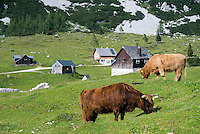 Bad Aussee, Ausseerland, Steiermark, Styria, Austria, September 2008. Tauplitz alm offers a green heven with cattle and many hiking trails along the lakes. The province of Styria is known for its green alpine landscape, good food and many lakes. Photo by Frits Meyst/Adventure4ever.com