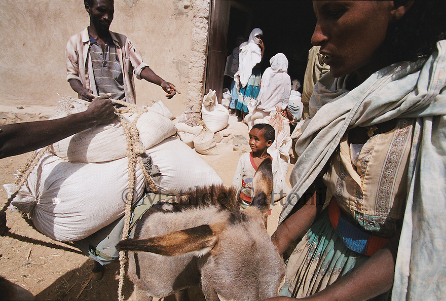 Eritrea - Debub- Villagers queing at the mill for food distribution. As a result of 30 years of war for independence against Ethiopia (from 1961 to 1991) and another 3 years from 1997 to 2000, there are 50,000 Eritreans currently living in internally displaced (IDP) camps throughout the country. These IDPs have fled three times in the last 10 years, each time because of renewed military conflict. They lived in relatives' homes when lucky enough, but mostly, the fled to the mountains, where they attempted to do what Eritreans do best, survive. Currently there is no Ethiopian occupation in Eritrea, but landmines prevent the IDPs from finally going home. .It is estimated that every Eritrean family lost two or three members to the war which makes the reality of the current emergency situation even more painful for Eritreans worldwide. Currently, the male population has been decreased dramatically, affecting the most fundamental socio-economic systems in the country. Among the refugee population, an overwhelming majority of families are female-headed, severely affecting agricultural production. For, IDPs in particular, 80% of households are female-headed..The unresolved border dispute with Ethiopia remains the most important drawback to Eritrea's socio-economic development, as national resources (human and material) continue to be prioritized for national defense. Eritrea is vulnerable to recurrent droughts and variable weather conditions with potentially negative effects on the 80 percent of the population that depend on agriculture and pastoralism as main sources of livelihood. The situation has been exacerbated by the unresolved border dispute, resulting in economic stagnation, lack of food security and increased susceptibility of the population to various ailments including communicable diseases and malnutrition..