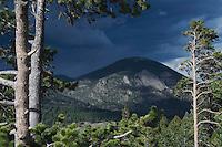 Mountain and Pine trees,Rocky Mountain National Park, Colorado, USA