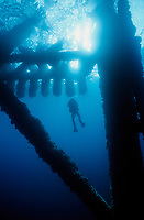 SANTA BARBARA CHANNEL, CA:  A SCUBA diver swims underneath a decommissioned oilrig in the waters near the Channel Islands National Park, California.  The super structure of the oil platform supports a wide variety of underwater acting as an artificial reef.