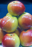 Apples Anna Malus domestica