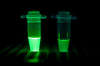 FLUORESCENT PCR TUBES<br />