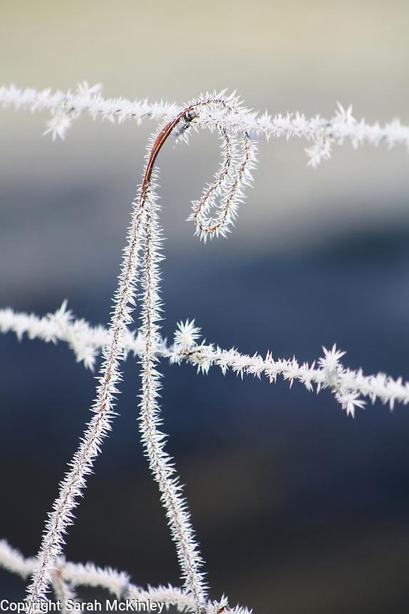 Frost fringes a barbed wire fence outside Willits in Mendocino County in Northern California.