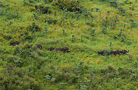 A group of elephants in the Bandingalio National  Park.  Conservationists have placed satellite collars on animals in South Sudan to unravel patterns of unknown migration routes in wildlife living in the Boma-Jonglei Landscape. (PHOTO: MIGUEL JUAREZ LUGO)
