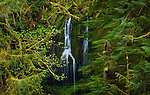 Waterfall, Columbia River Gorge, Oregon