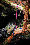 A noose made from neckties hangs from the branch of  a tree in Aokigahara Jukai, better known as the Mt. Fuji suicide forest, which is located at the base of Japan's famed mountain west of Tokyo, Japan. ..