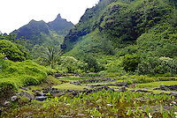 Terraced 700 year old rock walls near a lush green lo'i pond (taro or kalo--- species colocasia esculenta), a sacred Native Hawaiian plant and food source. Photographed at Limahuli Gardens, on Kauai's majestic north shore. One of the 5 National Trop