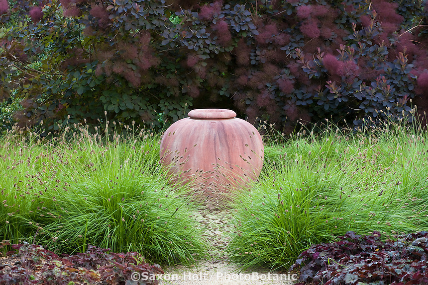 Terra cotta urn focal point amongst ornamental grass Pennisetum 'Bunny Tails' and purple foliage Smokebush Cotinus 'Grace' in drought tolerant garden, Robyn Sherrill design